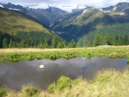 Selva dei Molini e Lappago - Estate
